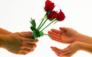 rosas-500-1