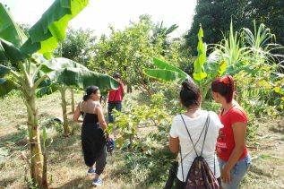 arbres frutiers -ferme Bio- el chico