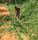 bambous 4