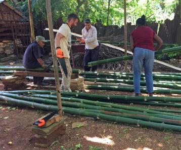 bambous 7