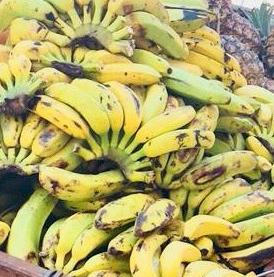 DONATION DE FRUITS ET LEGUMES DE NOTRE EXPLOITATION, AUX PERSONNES ÂGÉES DE LA PAROISSE DE BEJUCAL A CUBA.