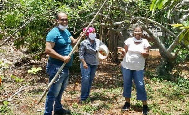 RÉCOLTE DES FRUITS DANS NOTRE EXPLOITATION DU CENTRE D'ACCUEIL DE CUBA.