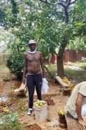 récolte fruits petits coeurs de Cuba Centre Miséricorde divine El Chico5